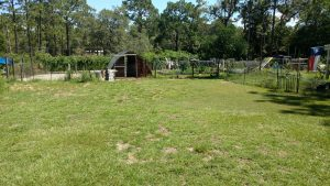 My Daily Chores: Chelsea at The Green Acre Homestead
