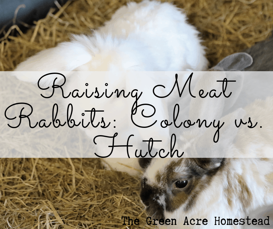 Raising Meat Rabbits: Colony vs. Hutch