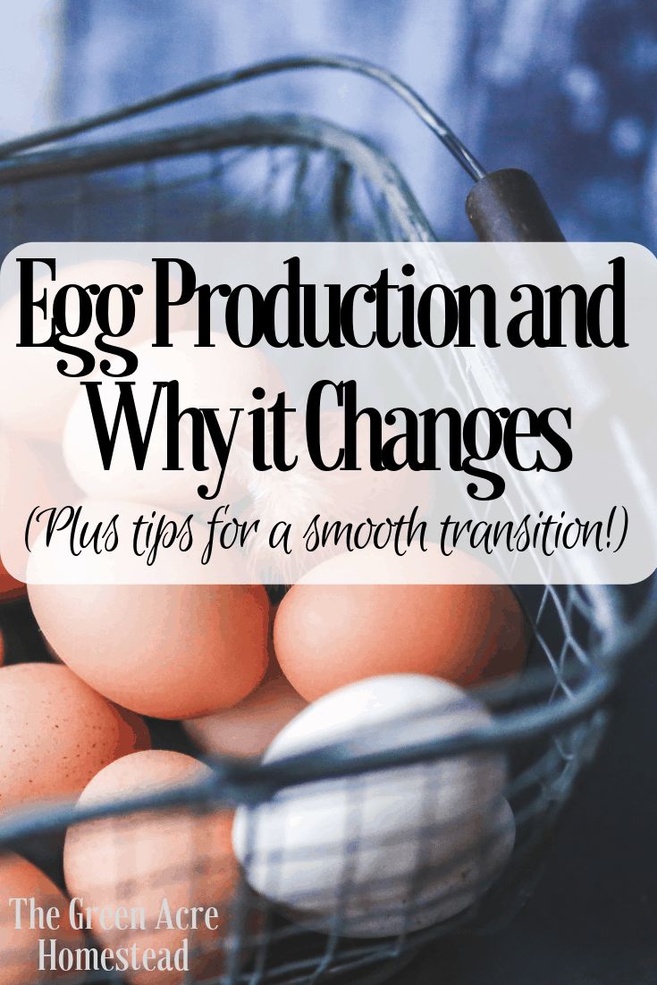 Egg Production and Why it Changes (Plus tips for a smooth transition!) (4)