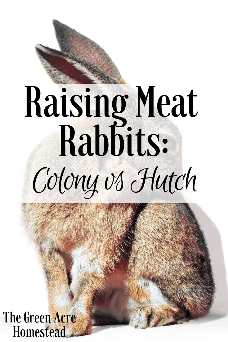 Raising Meat Rabbits_ Colony vs Hutch