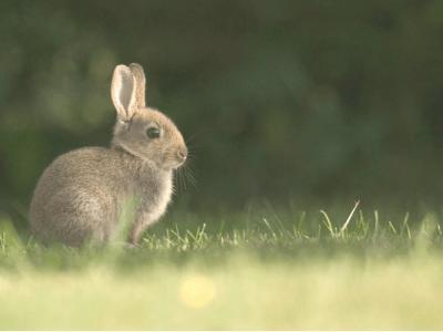 Raising meat rabbits (1)