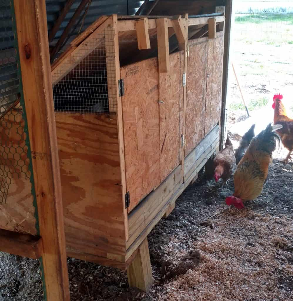 What Does a Henhouse Need? Plus some extras!