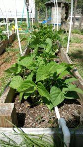The 5 Easiest Vegetables to Grow as a Beginning Gardener