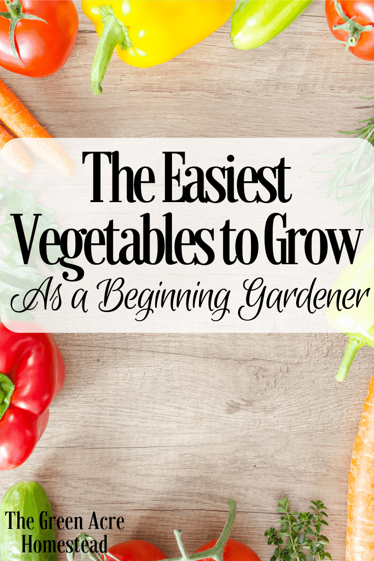 The Easiest Vegetables to Grow As a Beginning Gardener