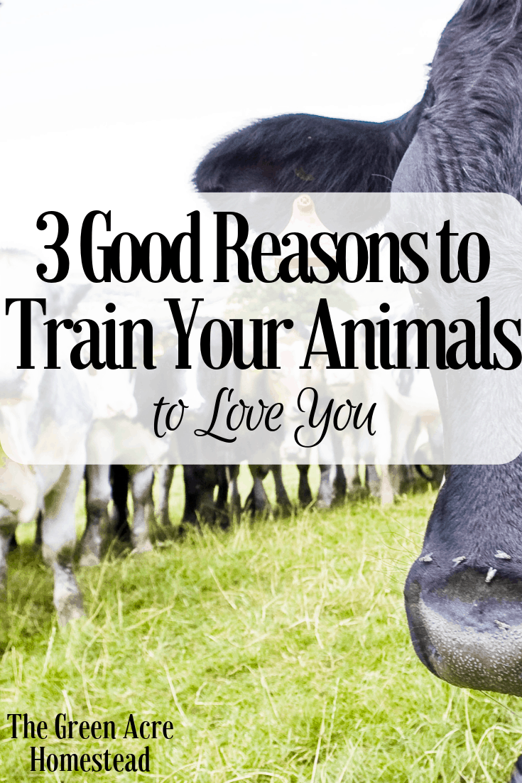 3 Good Reasons to Train Your Animals to Love You (1)
