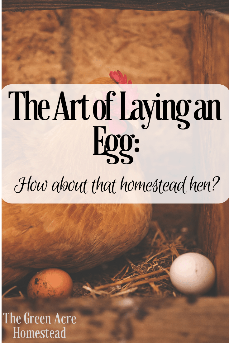 The Art of Laying an Egg_ How about that homestead hen_ (1)