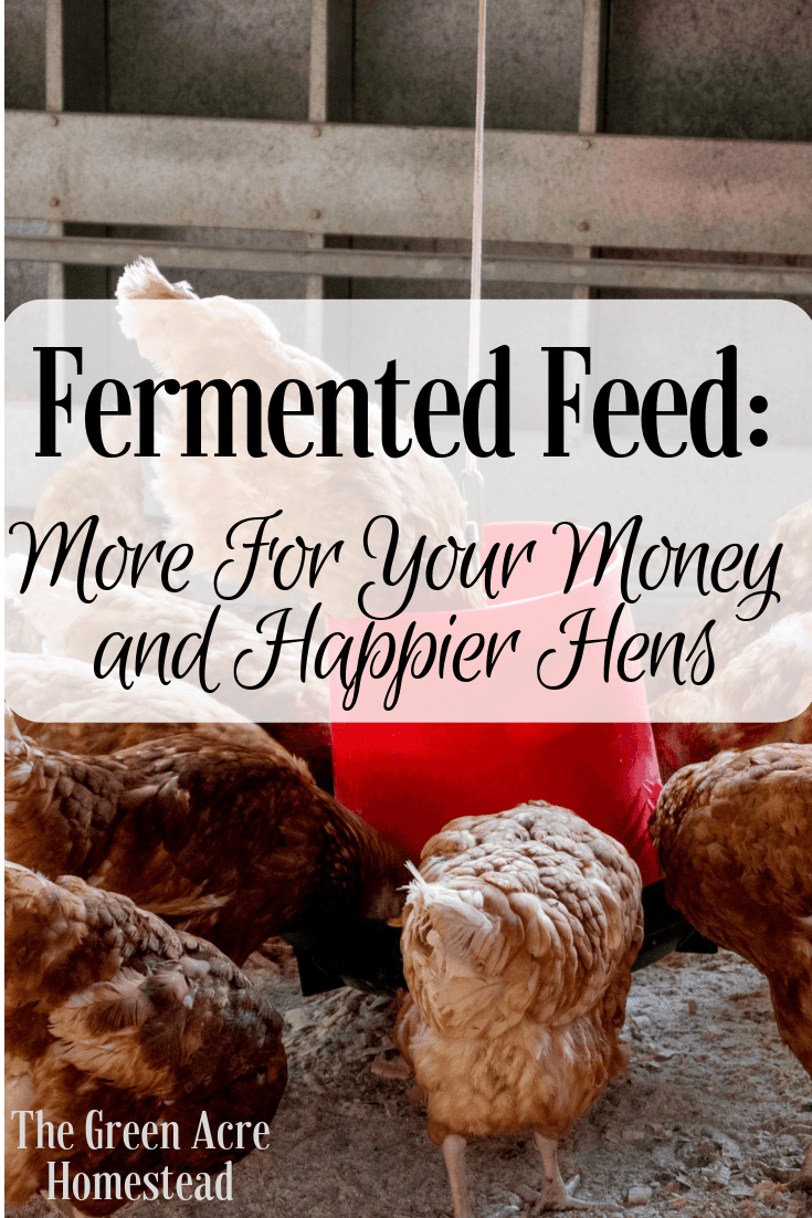 Fermented Feed_ More For Your Money and Happier Hens
