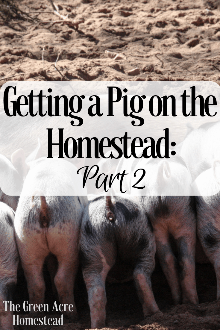 Getting a Pig on the Homestead_ Part 2 (4)