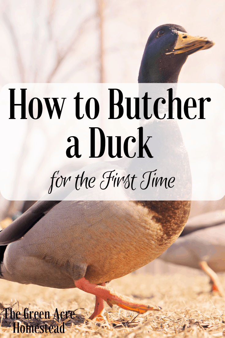 How to Butcher a Duck for the First Time (6)