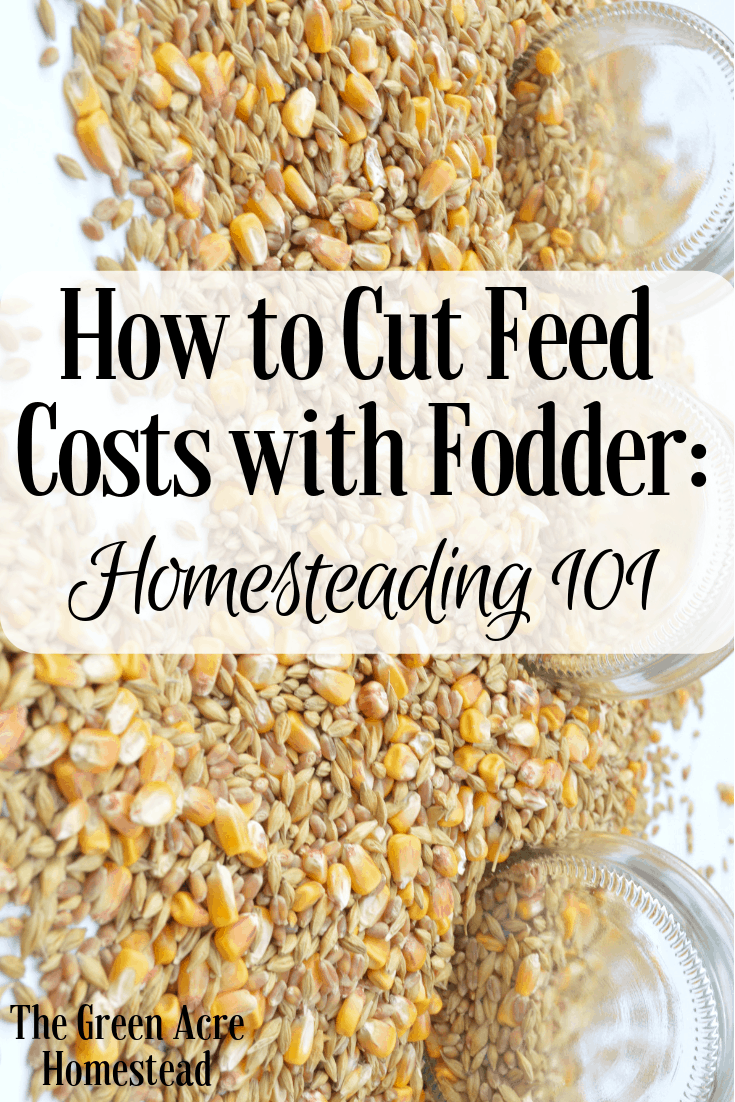 How to Cut Feed Costs with Fodder_ Homesteading 101