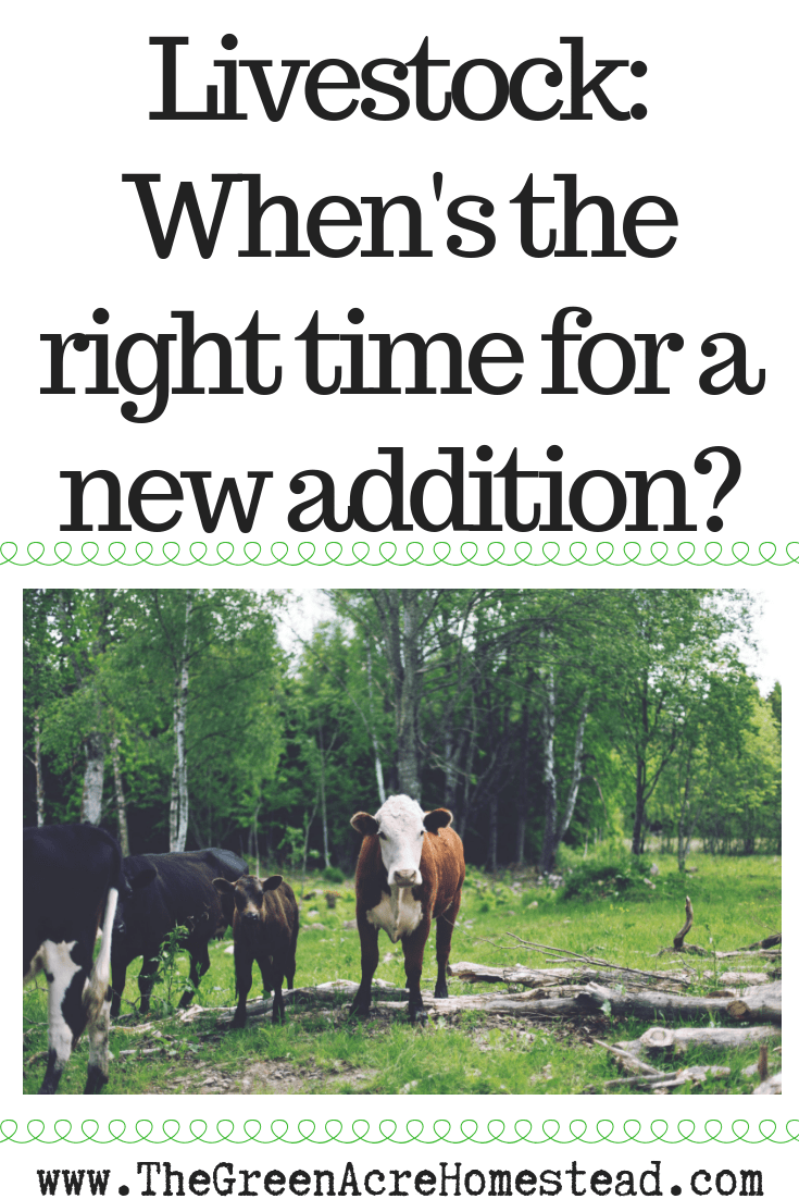 Livestock_ When's the right time for a new addition_ (1)