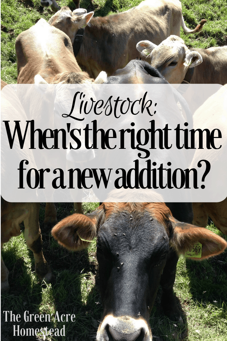 Livestock_ When's the right time for a new addition_ (4)