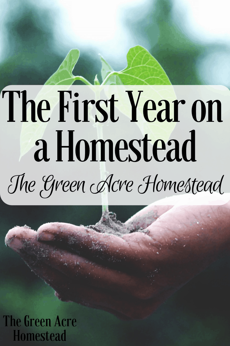 The First Year on a Homestead (4)