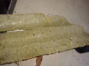 harvest luffa sponges