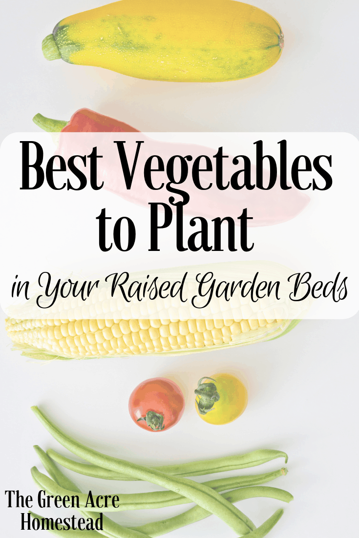 Best Vegetables to Plant in Your Raised Garden Beds