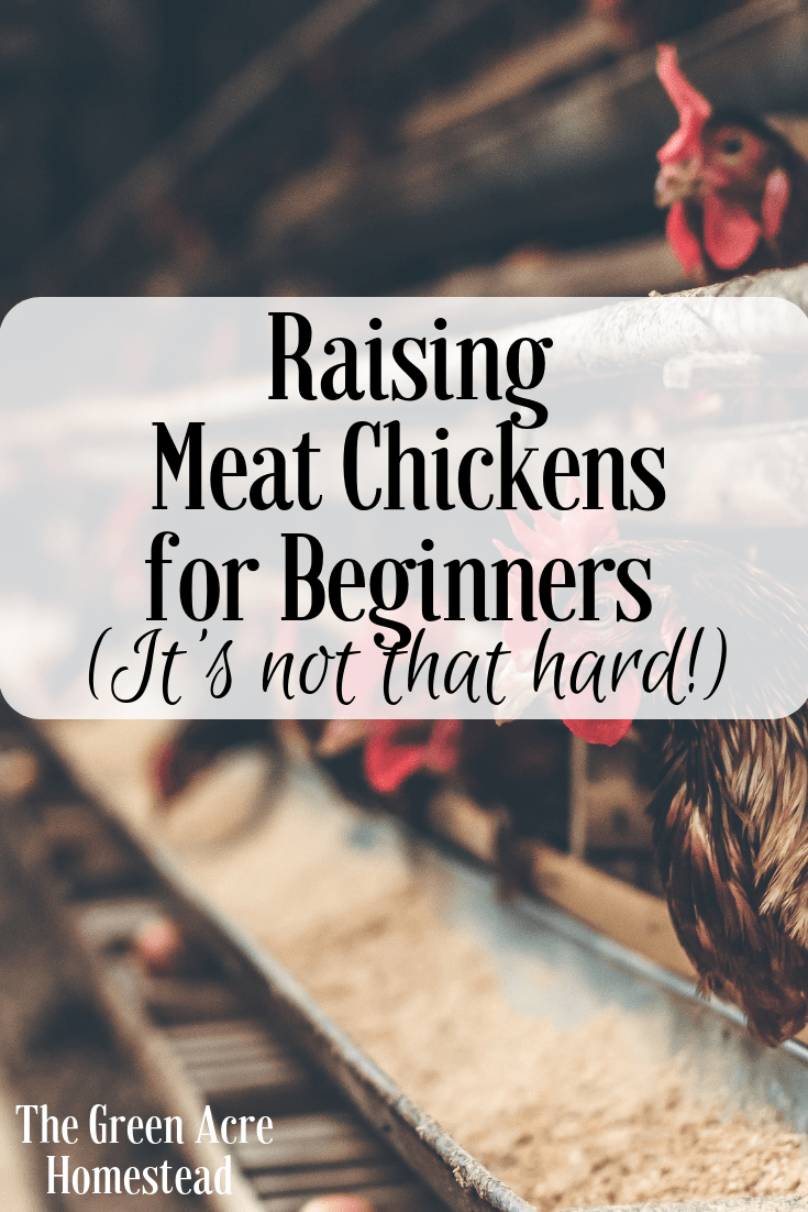 Raising Meat Chickens for Beginners (It's not that hard!)