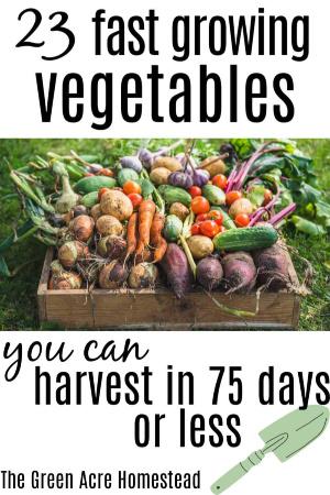 23 fast growing vegetables