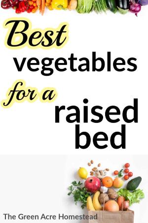 best vegetables for raised beds