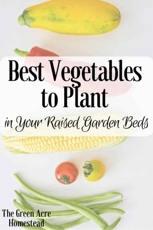 best vegetables to plant in raised beds