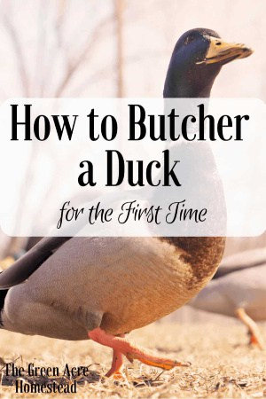 how to butcher a duck