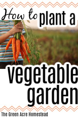 how to plant a vegetables garden