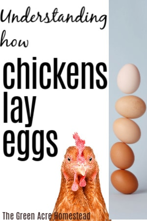 the art of laying an egg
