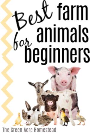 best farm animals for beginners